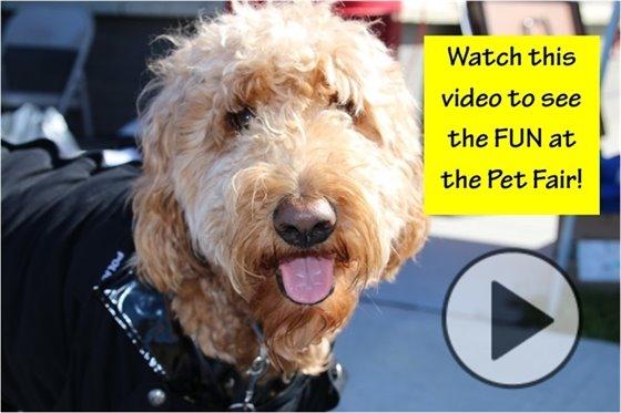 Pet Fair Video
