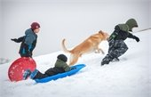 Children and a dog running up a snow hill with sleds.