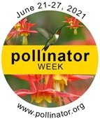 An image of a hummingbird feeding from a flower with the words Pollinator Week over the image.